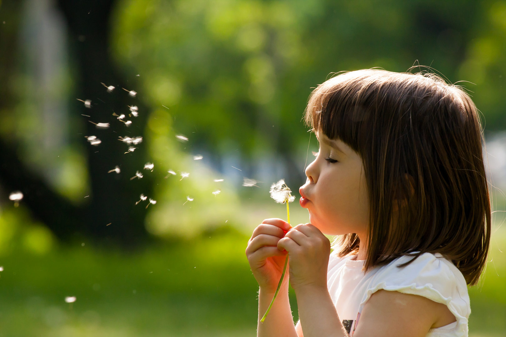 Enfant souffle fleur Association St Vincent de Paul